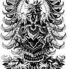 «Heráldica Fénix» de BioWorkZ