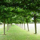 Trees at Sandingham by Richard Elston
