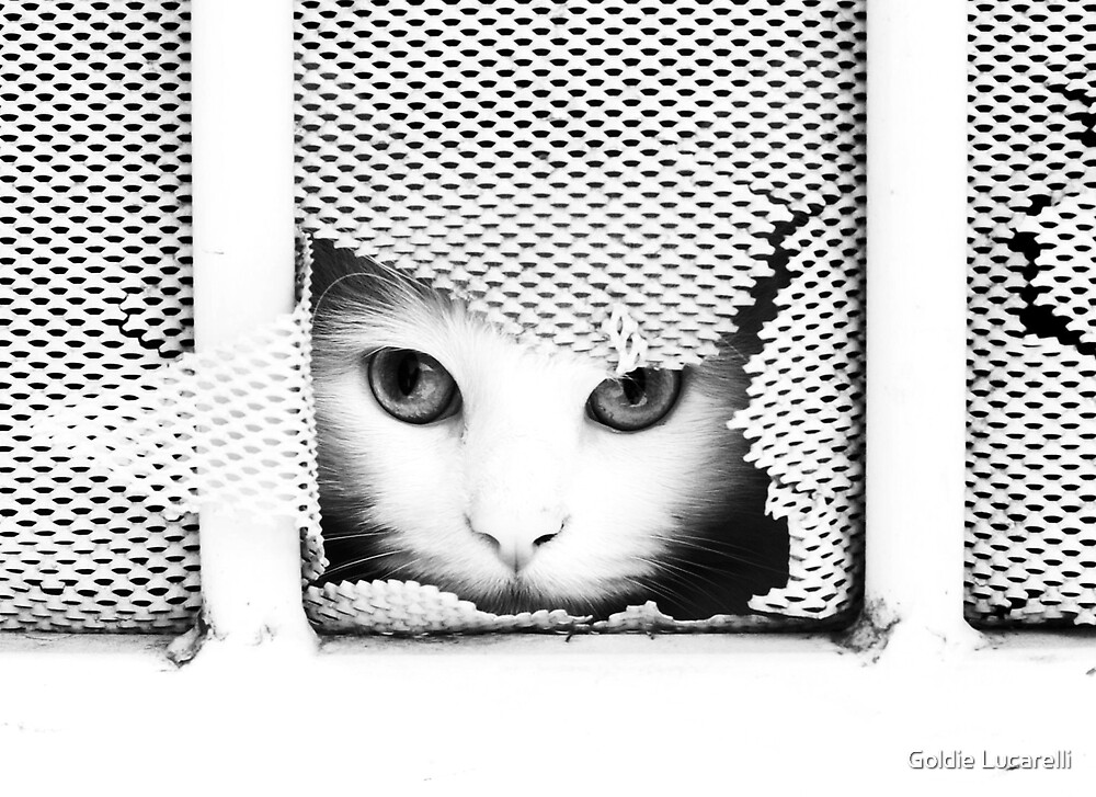 Here Kitty Kitty II by Goldie Lucarelli