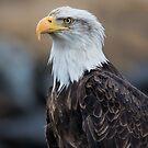 Eagle Profile by akaurora