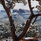 Sedona, Az - Through the Juniper  by Candy Gemmill