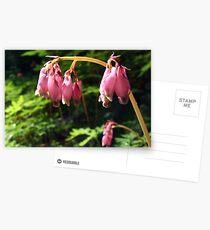 wildflowers Postkarten