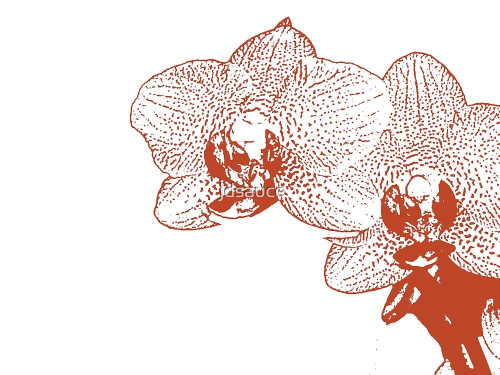 Aquila Orchid by jdsauce