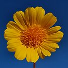 Yellow Beauty by HeavenOnEarth