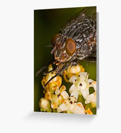 Fly eating nectar Greeting Card