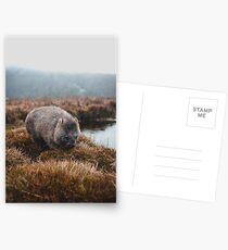 Tasmanian Wombat Postcards