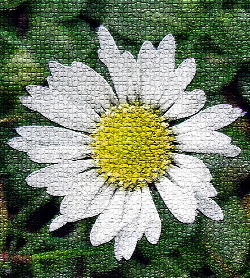 daisy mosaic by Caroline Anderson
