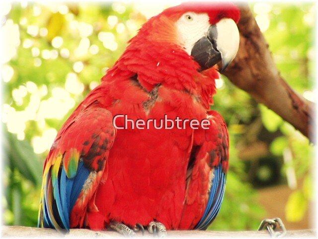 Mr. Parrot: San Diego Zoo by Cherubtree