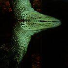 Gator Underwater Abstract by WildestArt
