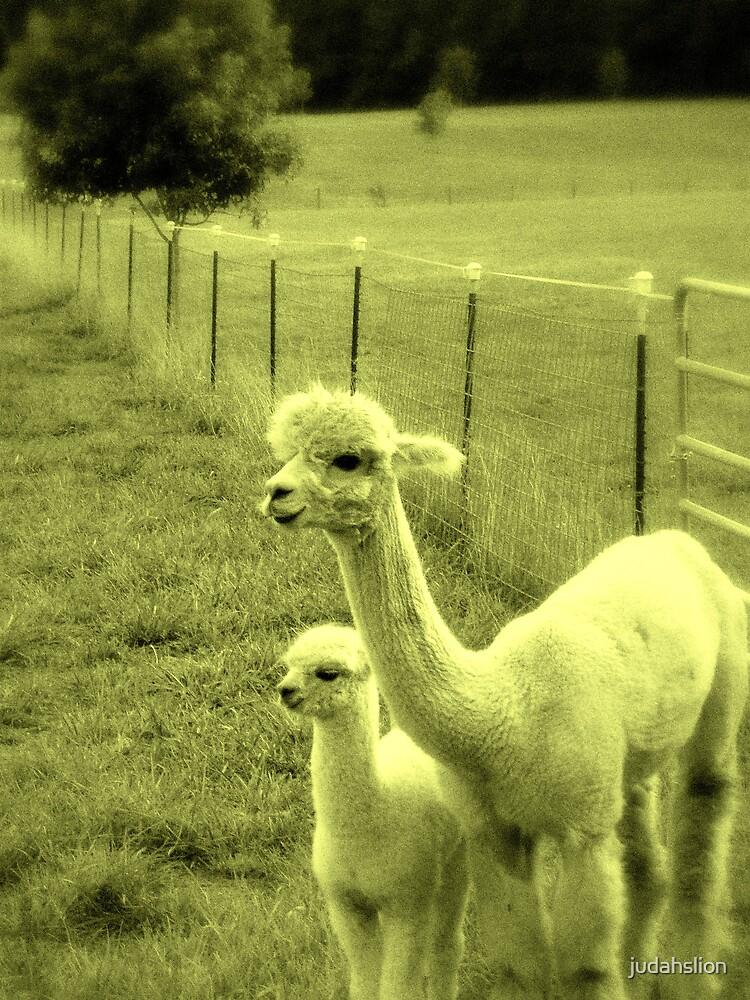 Alpaca family by judahslion