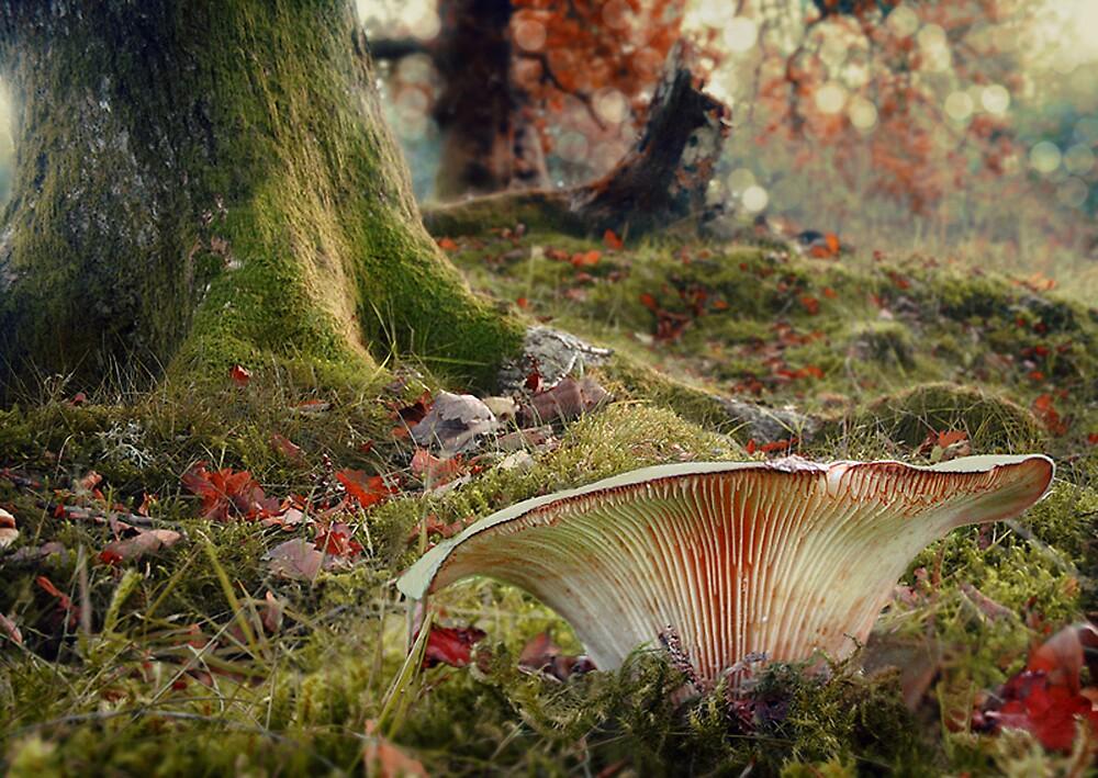 The Faerystool by Becca  Cusworth
