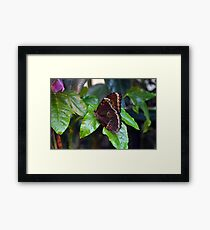 Brown butterfly on green leaves  Framed Print