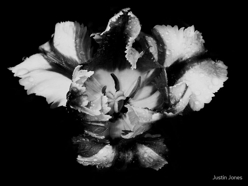 Tulip 3: Good Morning by Justin Jones