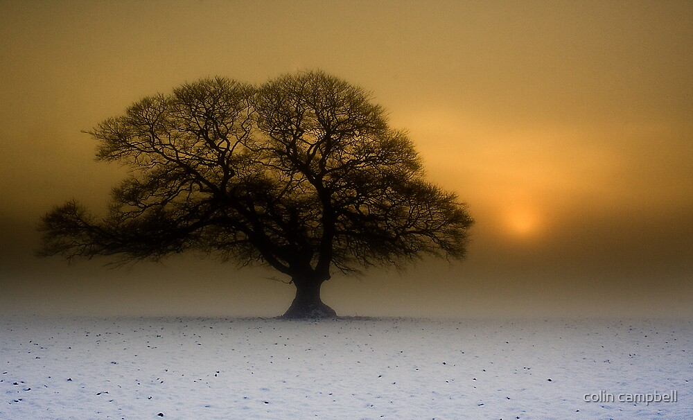 Winter fog breaking by colin campbell
