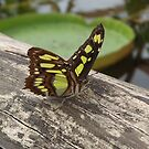 Butterfly on the Bridge by Riannebx