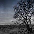 Winter Tree #3 by axemangraphics