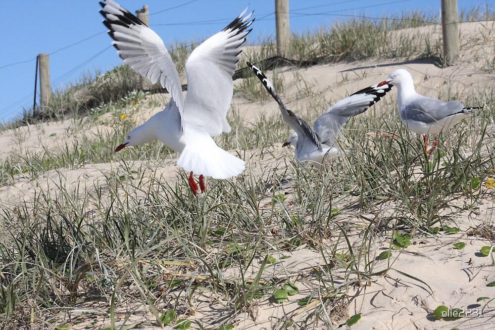 seagulls by elle2231