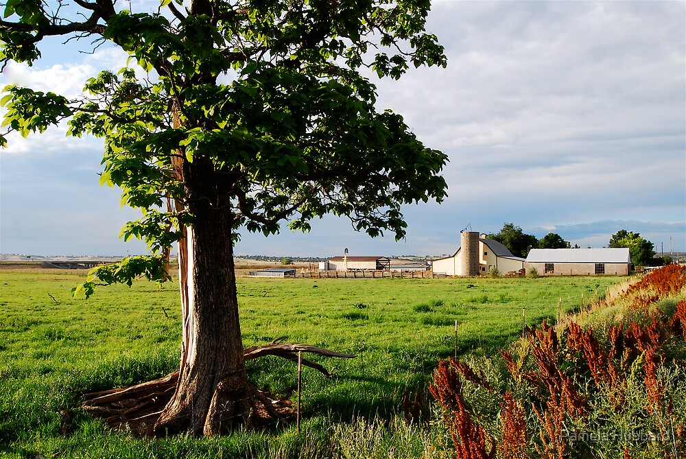 Colorado Farm by Pamela Hubbard
