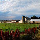 Farm by Pamela Hubbard