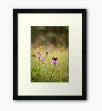 Tranquil Summer Framed Print