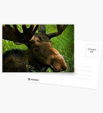 Marty Moose Postcards