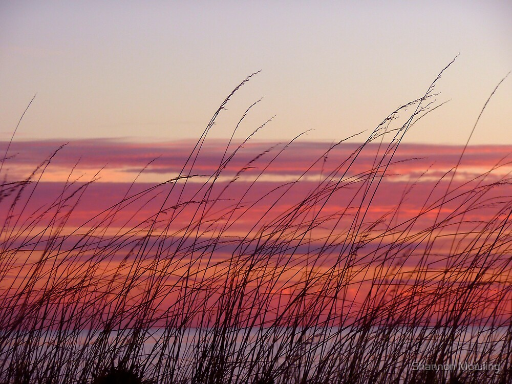 Reeds by Shannon Mowling