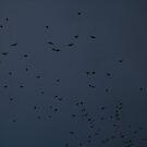 Bats! by JamesMichael