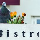This Pigeon likes Upmarket Living by lynn carter