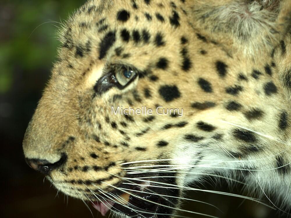 Jaguar by Michelle Curry