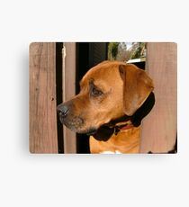 Scooby. Canvas Print