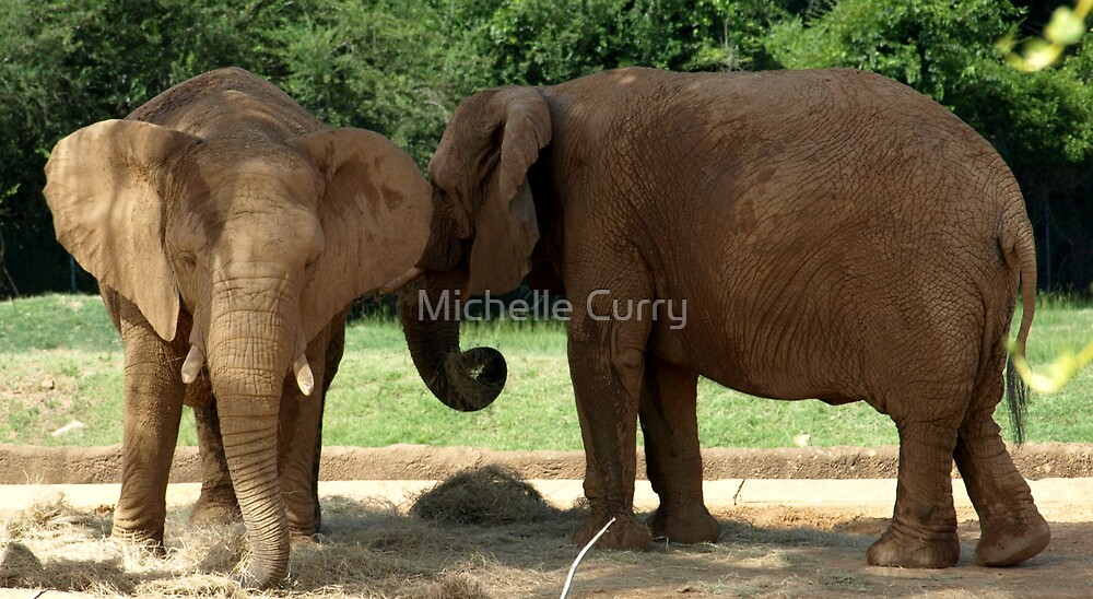 Elephants by Michelle Curry