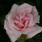 Pink! by MaddyPaddy