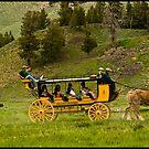 ~ Where the Buffalo Roam ~ by Tim Denny