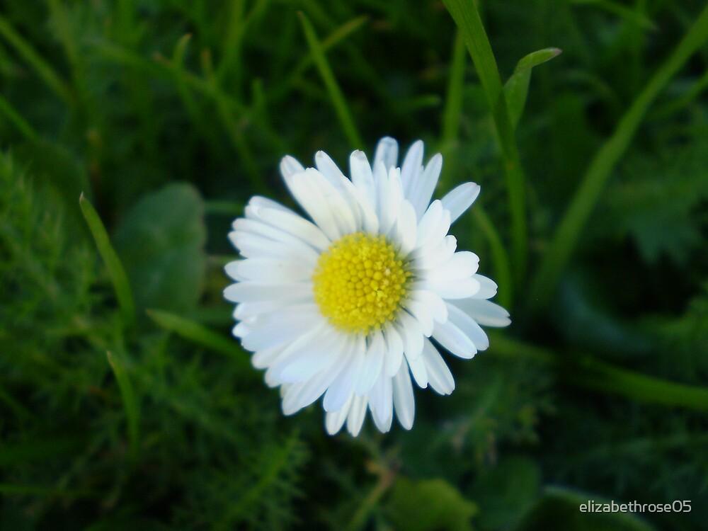 Little Daisy by elizabethrose05