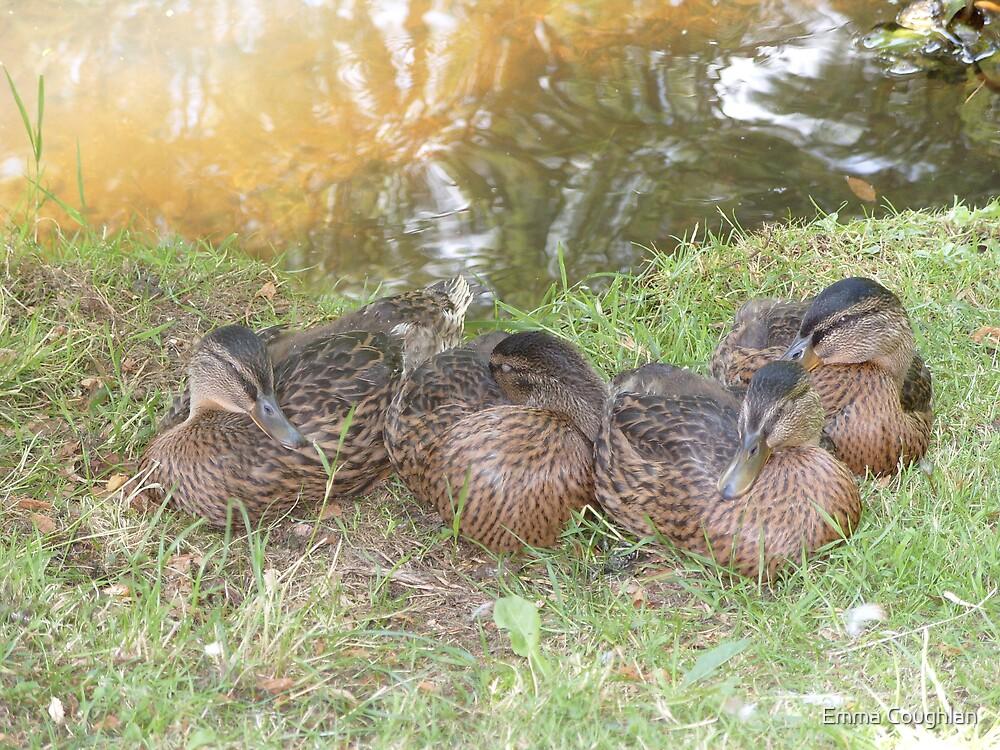 Sleeping Ducks by Emma Coughlan