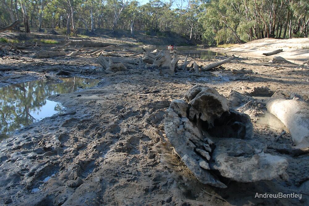 Edwards River Denilquin NSW June 2008 by AndrewBentley