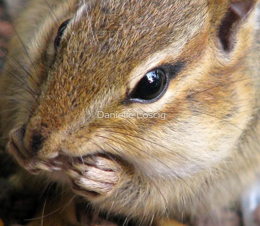 Chipmunk Up Close... by Danielle Loscig