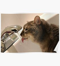 Cat drinking from tap   Poster