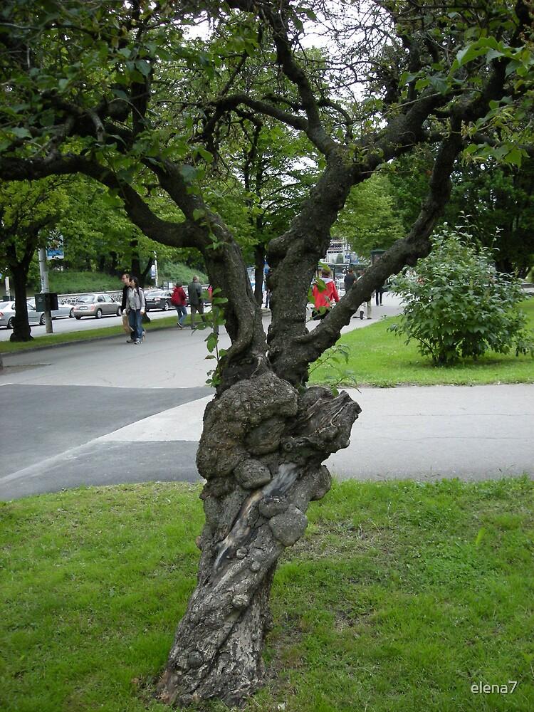 aged tree by elena7