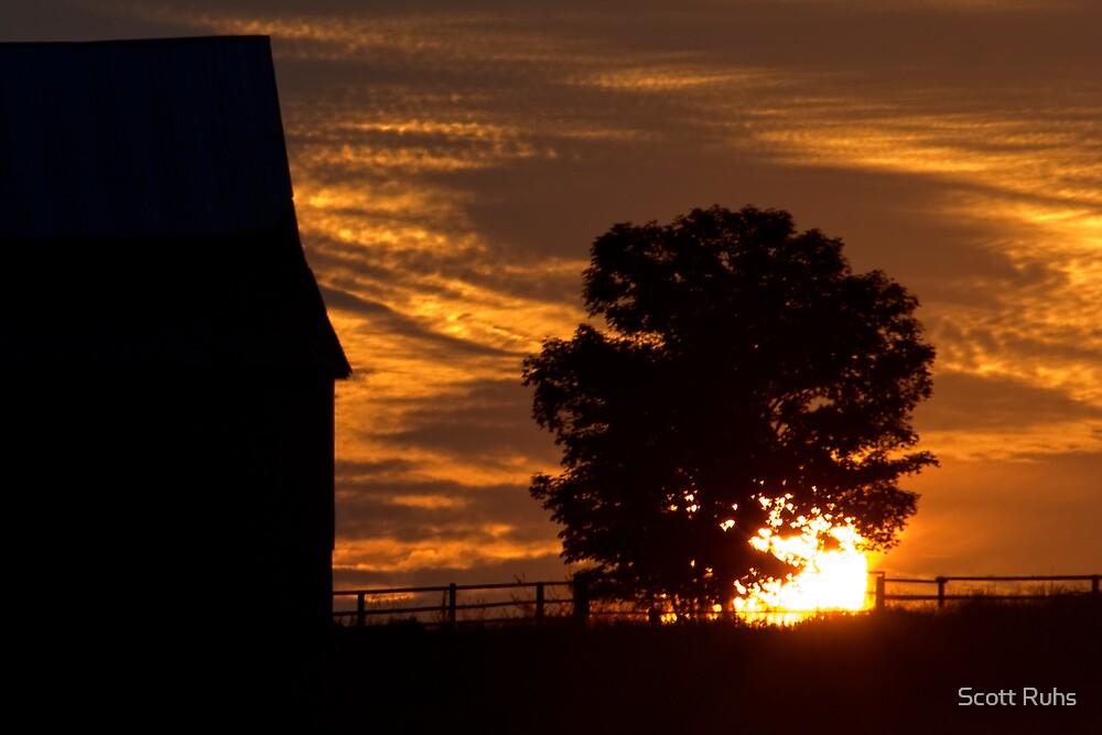 The Sunrise Tree by Scott Ruhs