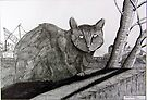 265 - PONCIAU CAT - DAVE EDWARDS - INK - 2017 by BLYTHART