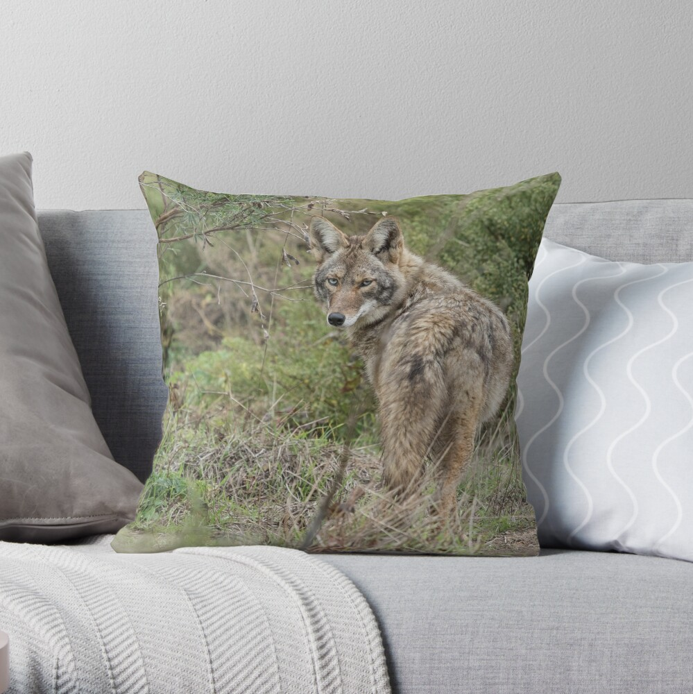 Wandering coyote Throw Pillow