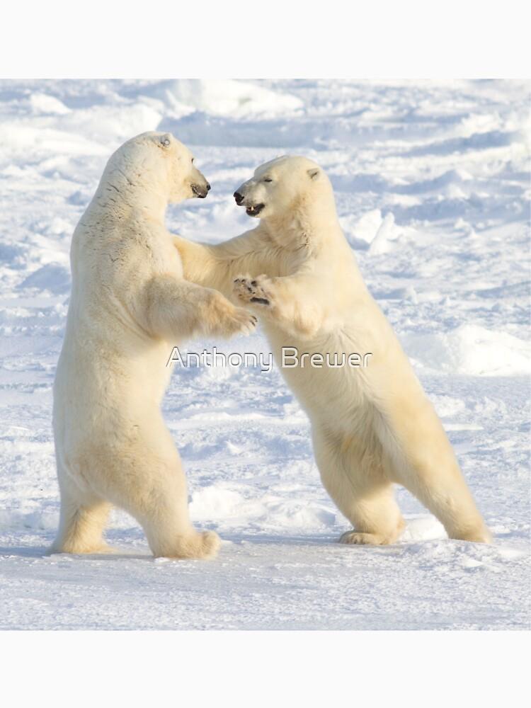 Dance of the white bears (I) by dailyanimals