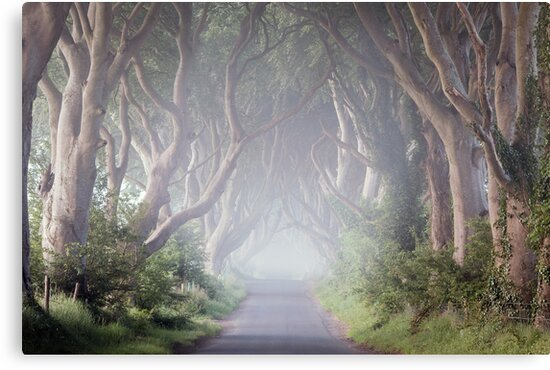 The Dark Hedges -  Game of Thrones - County Antrim -  Northern Ireland by Zdrojewski