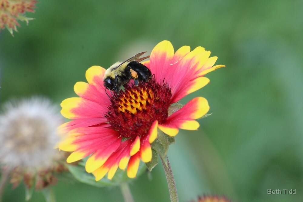 happy bee by Beth Tidd