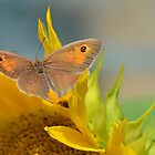 Meadow Brown. by relayer51