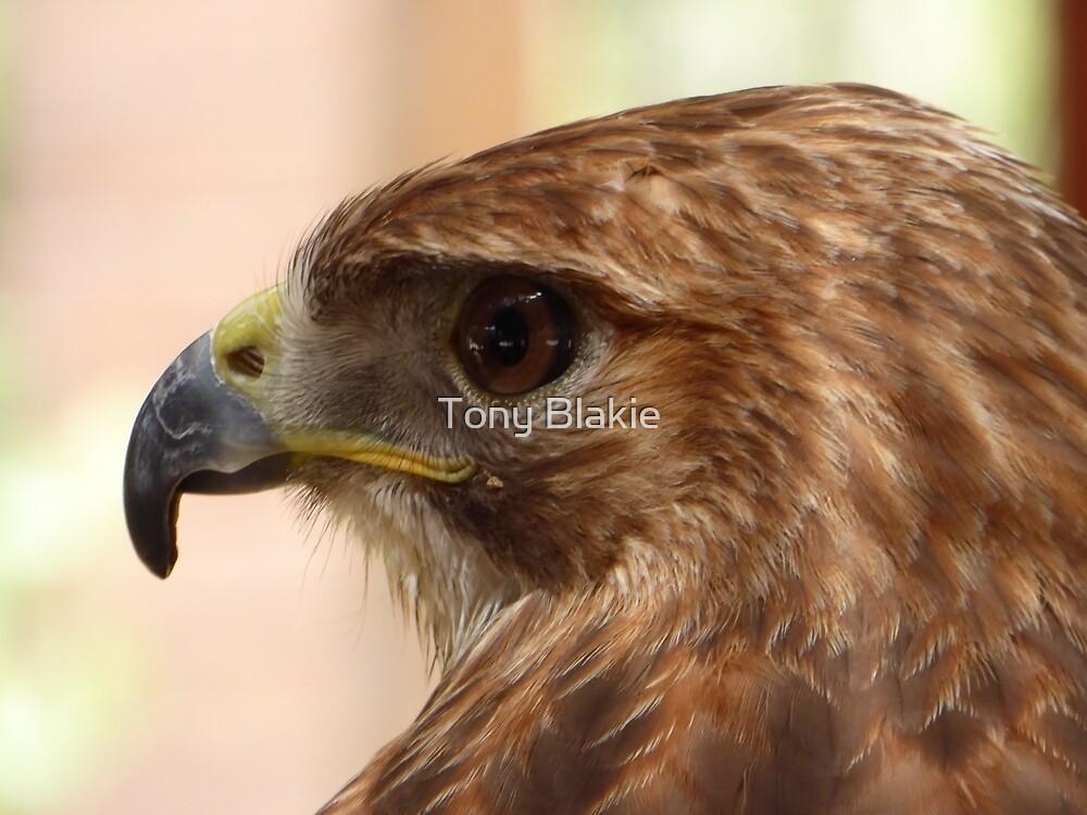 eagle head close-up by Tony Blakie