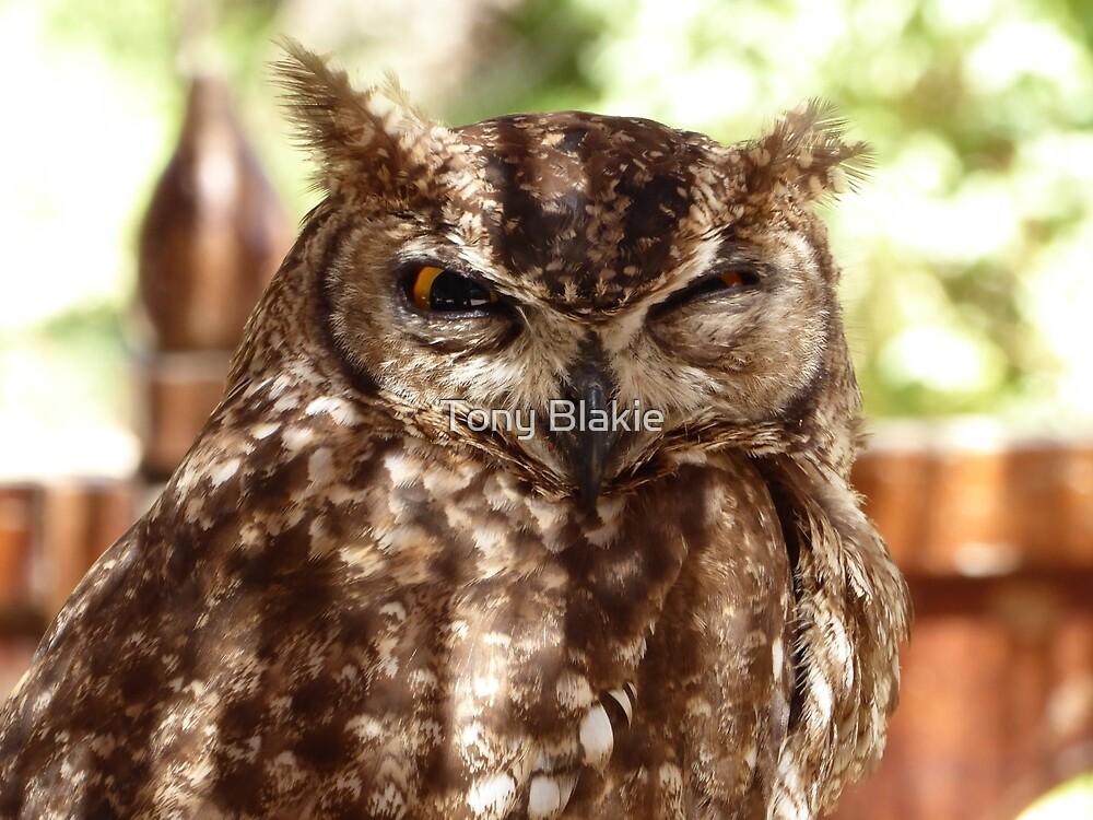 I'm watching you by Tony Blakie