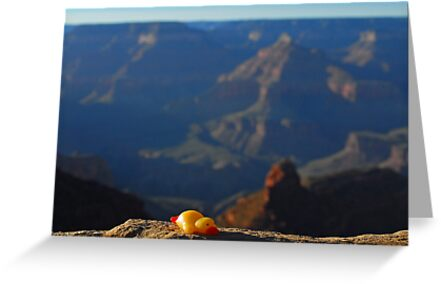 Ducks at the Grand Canyon by Andreas Mueller