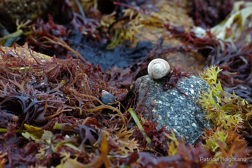 Hidden Treasures of Gooseberry Island, MA by Patricia Bolgosano